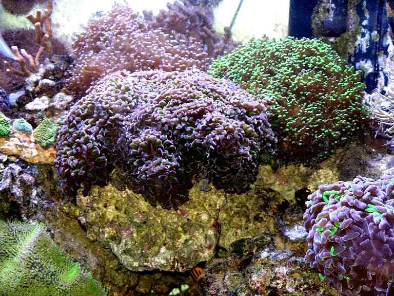 Plafoniere Per Acquari : Plafoniere per acquari marini